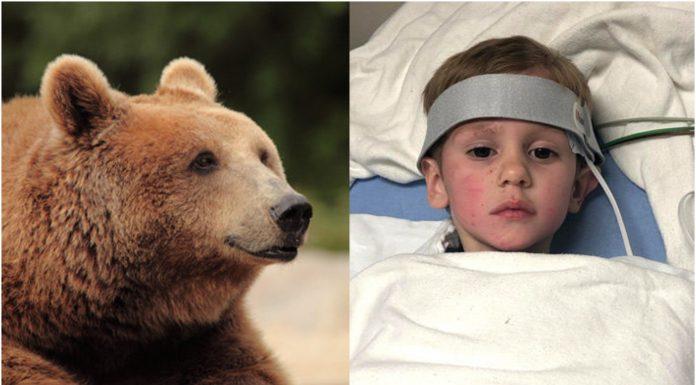 Bog poslao medvjeda da čuva dječaka