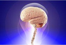 Zdravlje mozga