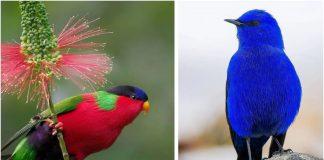 Najljepše ptice na svijetu