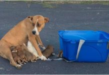 Ova uplašena majka i njezini psići su napušteni na parkiralištu
