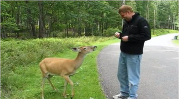 Hranio je gladnog jelena kojeg je sreo, a njegova reakcija ga je začudila