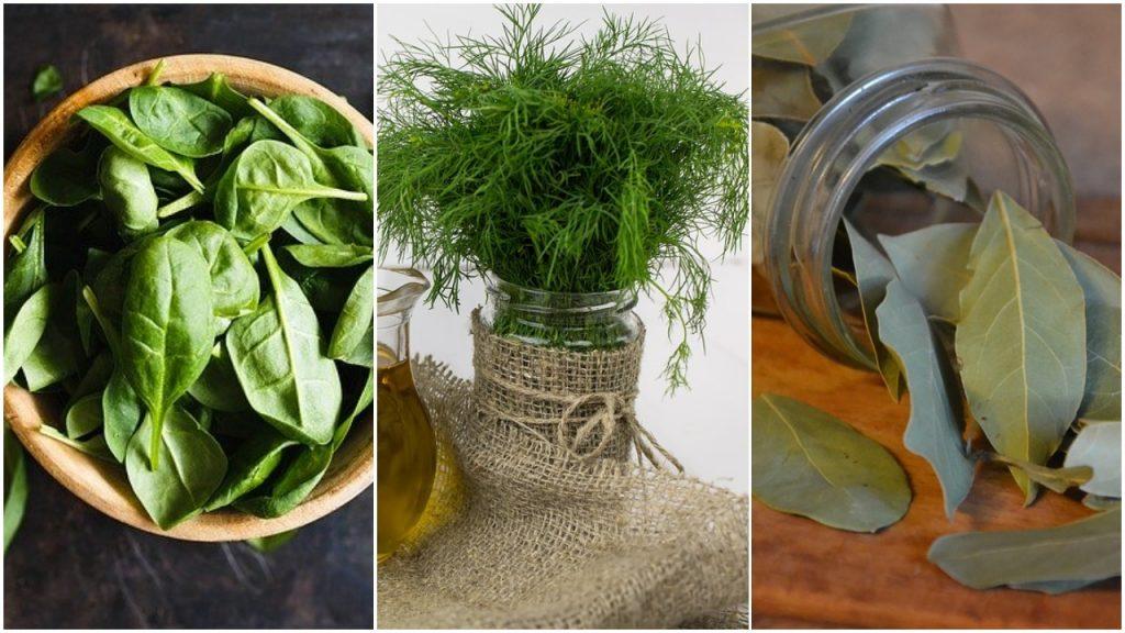 Začinske biljke koje štite od bolesti