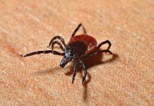 Novi opasan virus se pojavio u Kini, prenose ga krpelji