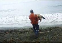 Kupio je sve morske kornjače na tržnici te ih pustio na slobodu