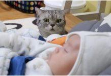 Novorođenče je stiglo kući, a mačkina reakcija je nevjerojatna