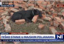 Pas čuva ruševine