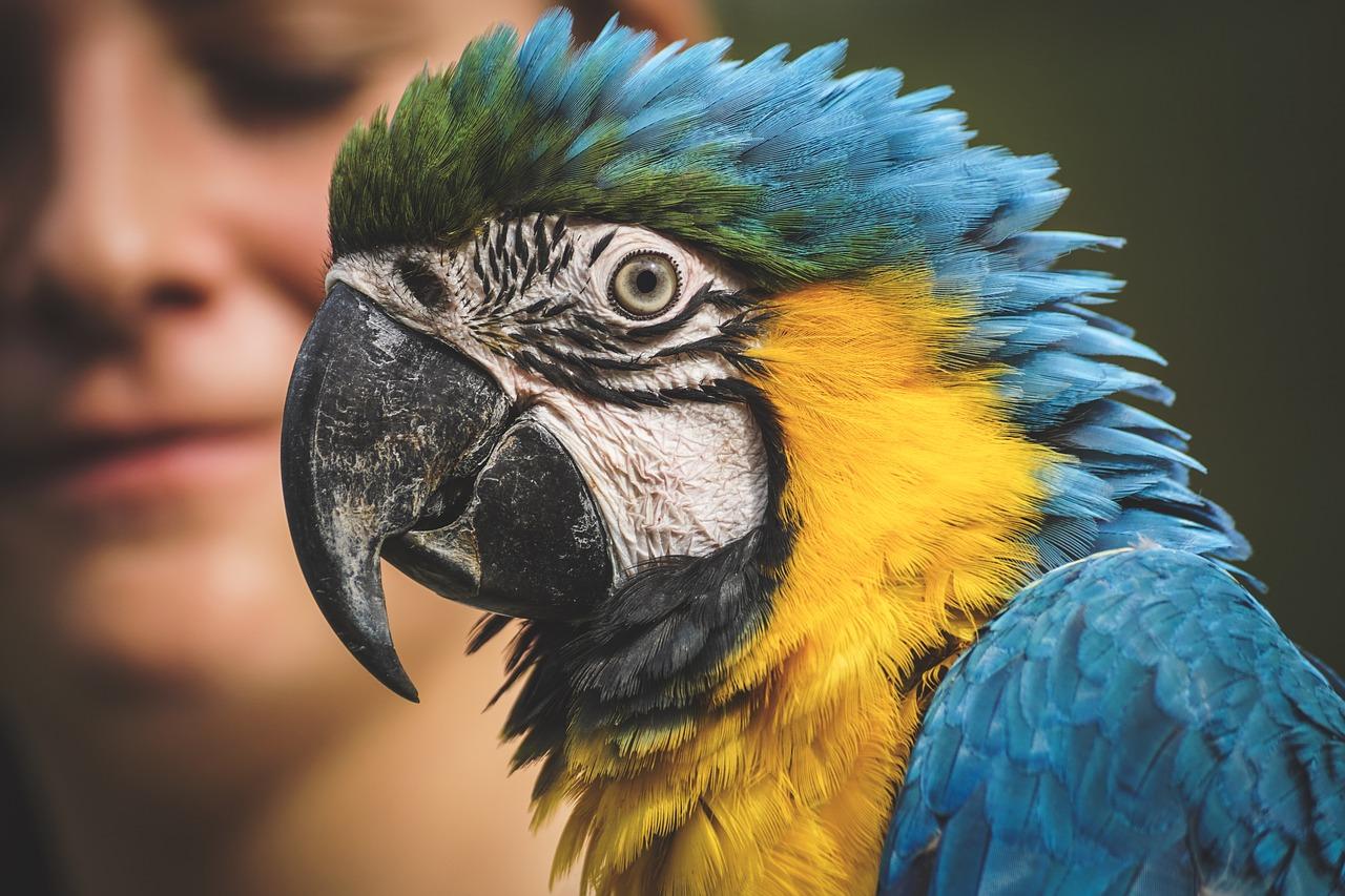 Vlasnik je zaspao, a papagaj ga je probudio: Nije ni slutio što će ugledati