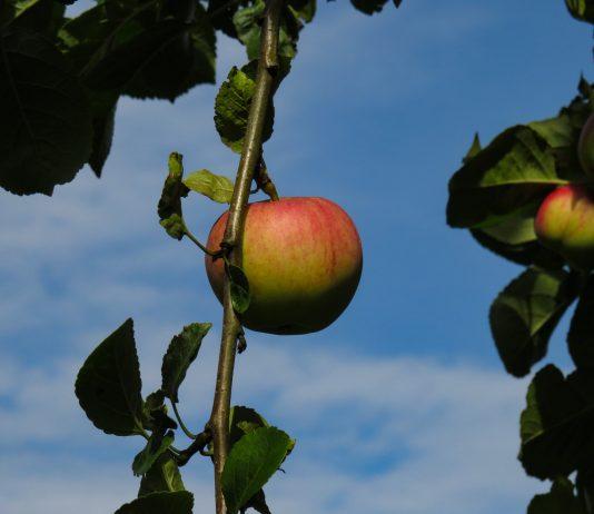 Zabranjeni plod