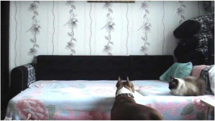 Rekao je psu da ne smije na krevet