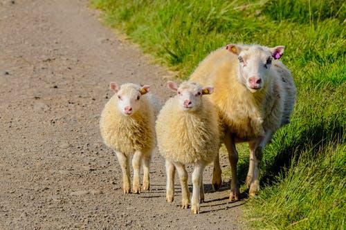 Životinja koja se najčešće spominje u Bibliji