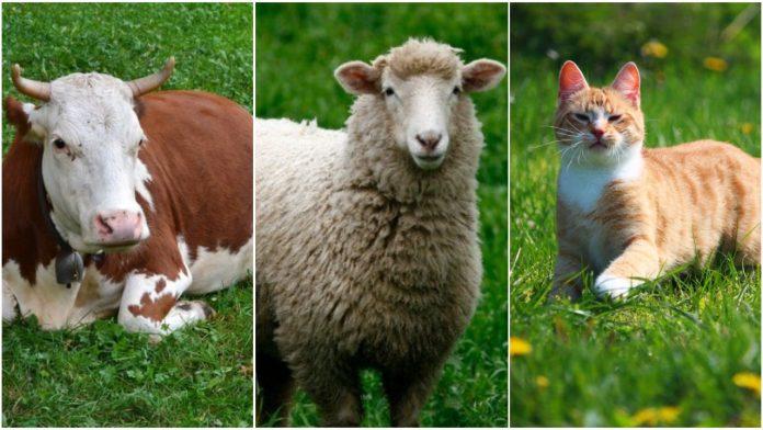 životinja spominje u Bibliji