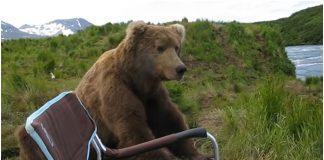 Fotograf je snimao krajolik, a onda ugledao medvjeda koji je sjeo pored njega