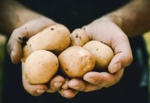 Što će vam se dogoditi ako često jedete krumpir
