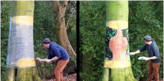 Umjetnik je počeo slikati na stablu