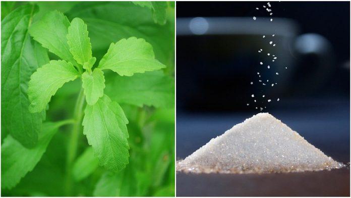 Stevija kao zamjena za šećer: Za što je sve zdrava?