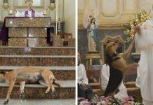 Ovaj svećenik dovodi na misu pse lutalice ... I ima jedan zahtjev za vjernike!