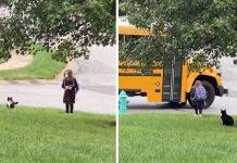 """Ovaj mačak kao """"anđeo čuvar"""" svaki dan prati djevojčicu do autobusa"""