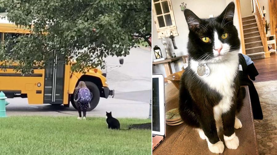 Kako je mačak ušao u obitelj?